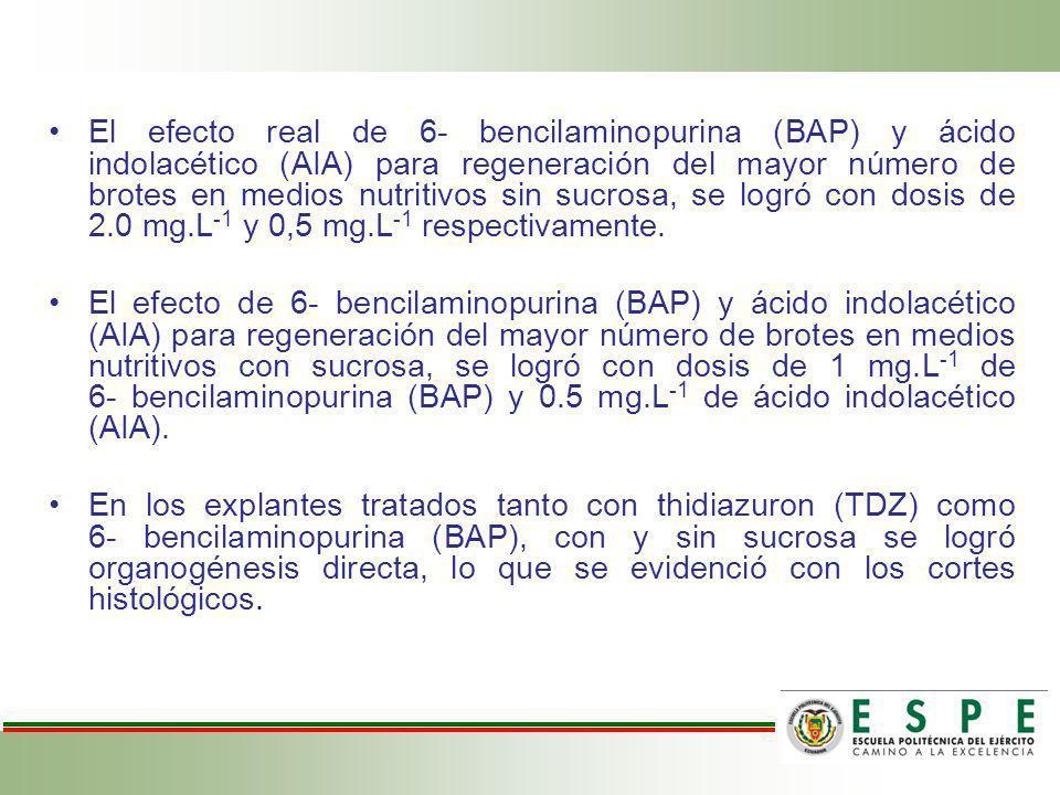 El efecto real de 6- bencilaminopurina (BAP) y ácido indolacético (AIA) para regeneración del mayor número de brotes en medios nutritivos sin sucrosa, se logró con dosis de 2.0 mg.L-1 y 0,5 mg.L-1 respectivamente.