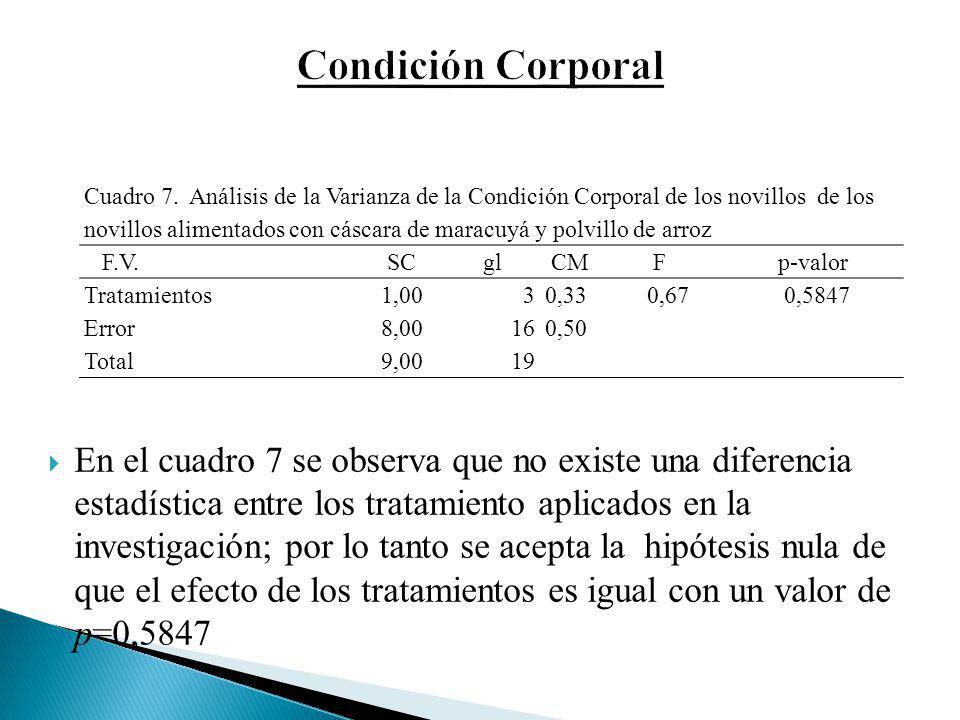 Condición Corporal