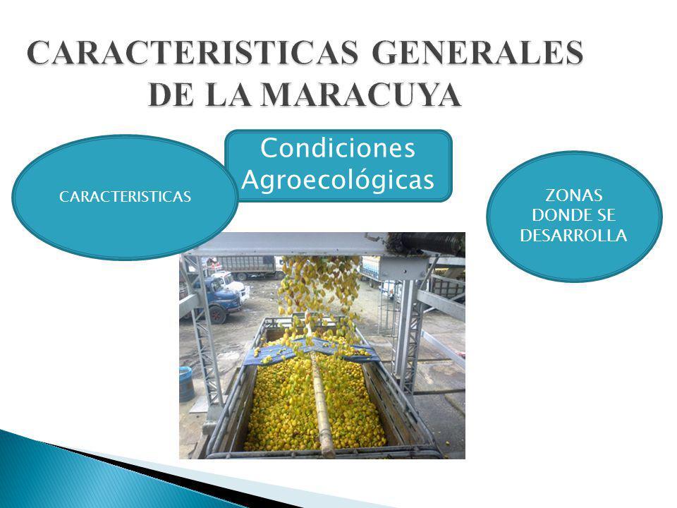 CARACTERISTICAS GENERALES DE LA MARACUYA