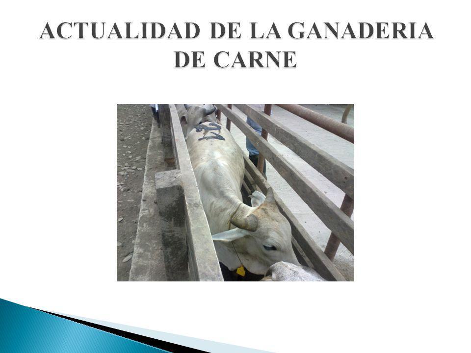 ACTUALIDAD DE LA GANADERIA DE CARNE