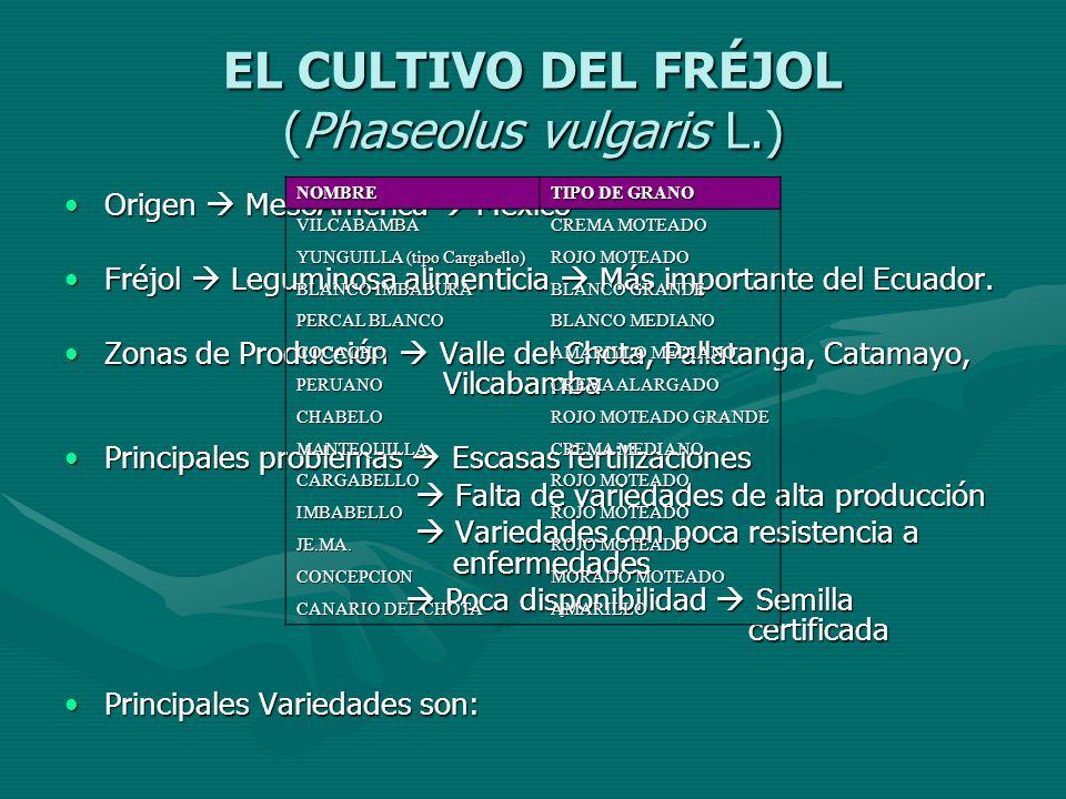EL CULTIVO DEL FRÉJOL (Phaseolus vulgaris L.)