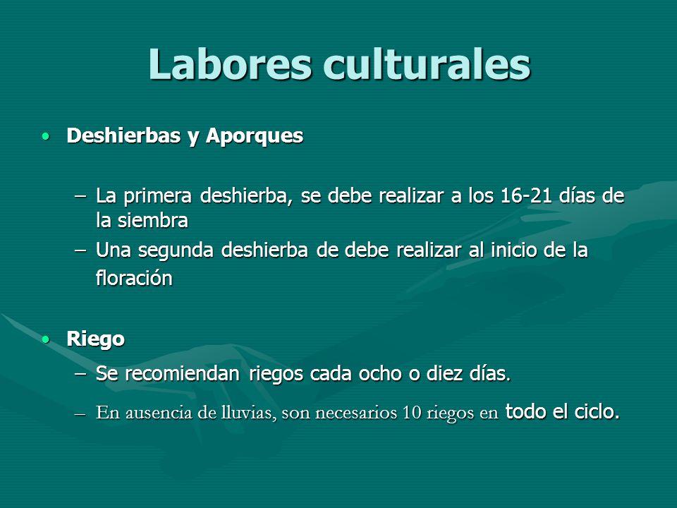 Labores culturales Deshierbas y Aporques