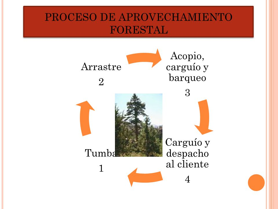 PROCESO DE APROVECHAMIENTO FORESTAL
