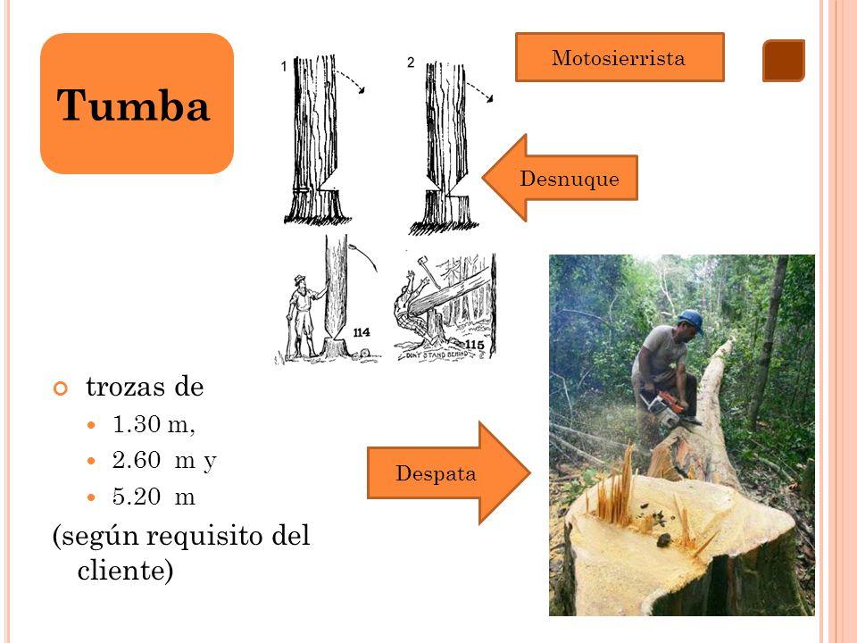 Tumba trozas de (según requisito del cliente) 1.30 m, 2.60 m y 5.20 m