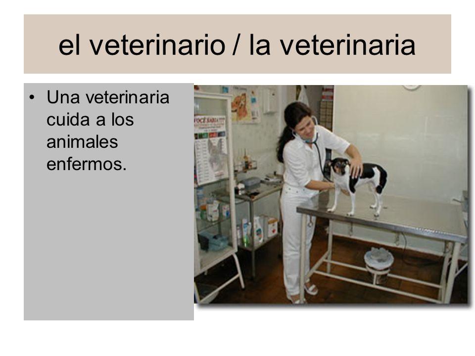 el veterinario / la veterinaria