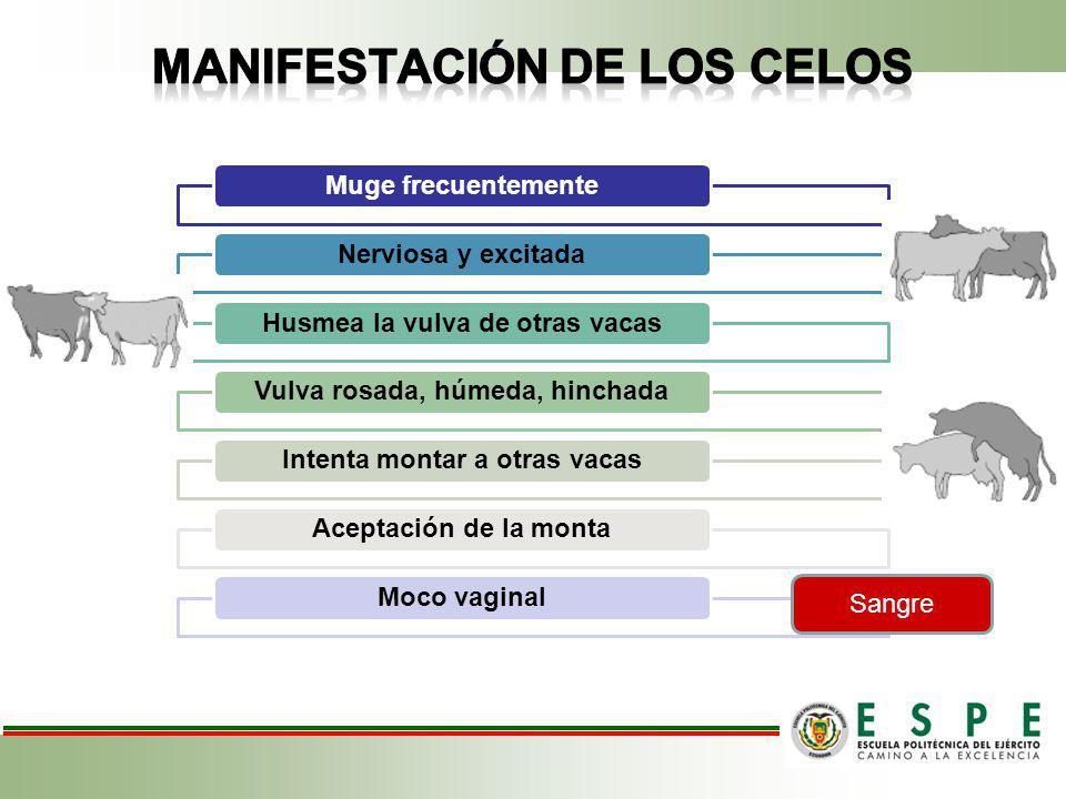 MANIFESTACIÓN DE LOS CELOS