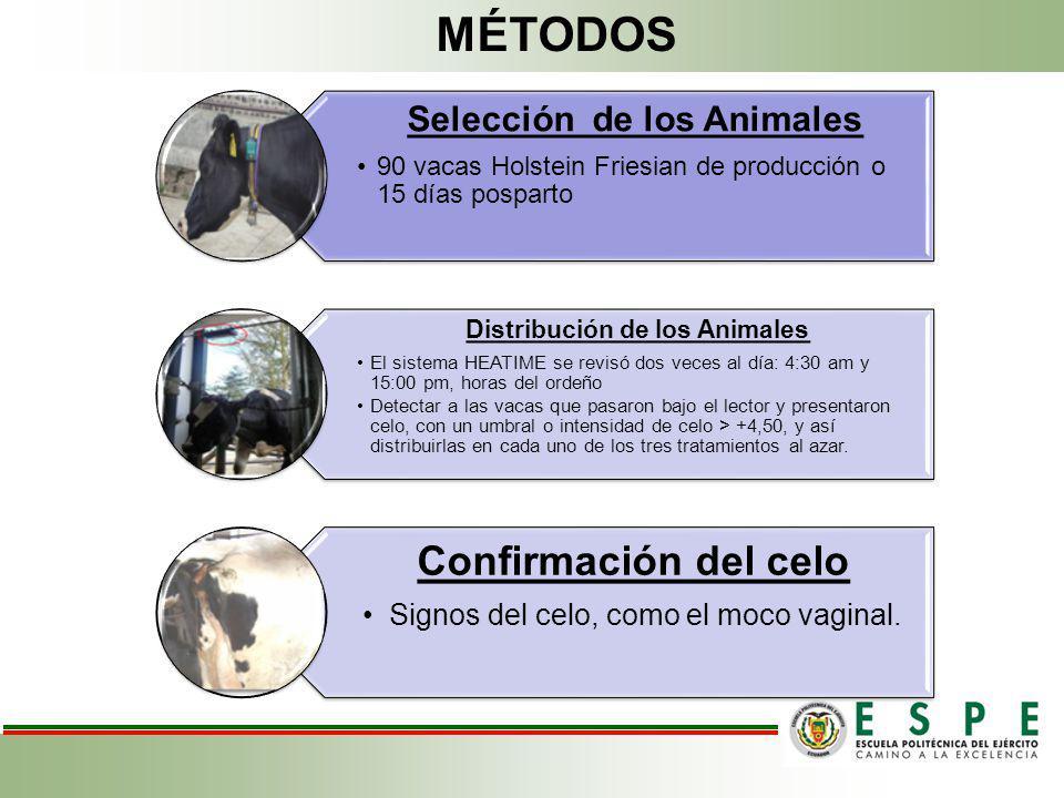 Selección de los Animales Distribución de los Animales