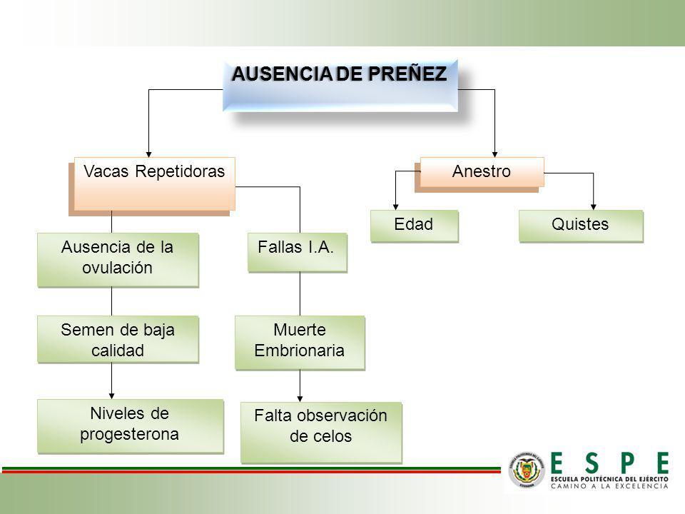 AUSENCIA DE PREÑEZ Vacas Repetidoras Muerte Embrionaria