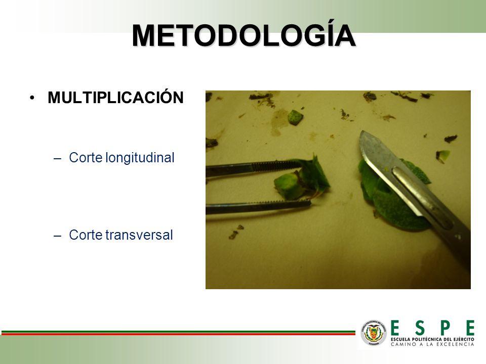 METODOLOGÍA MULTIPLICACIÓN Corte longitudinal Corte transversal