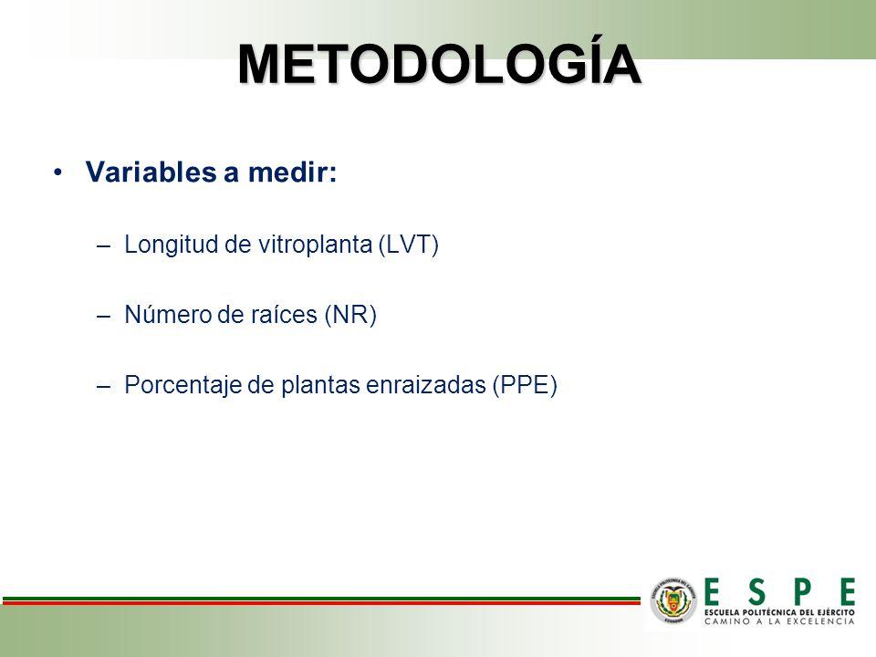 METODOLOGÍA Variables a medir: Longitud de vitroplanta (LVT)