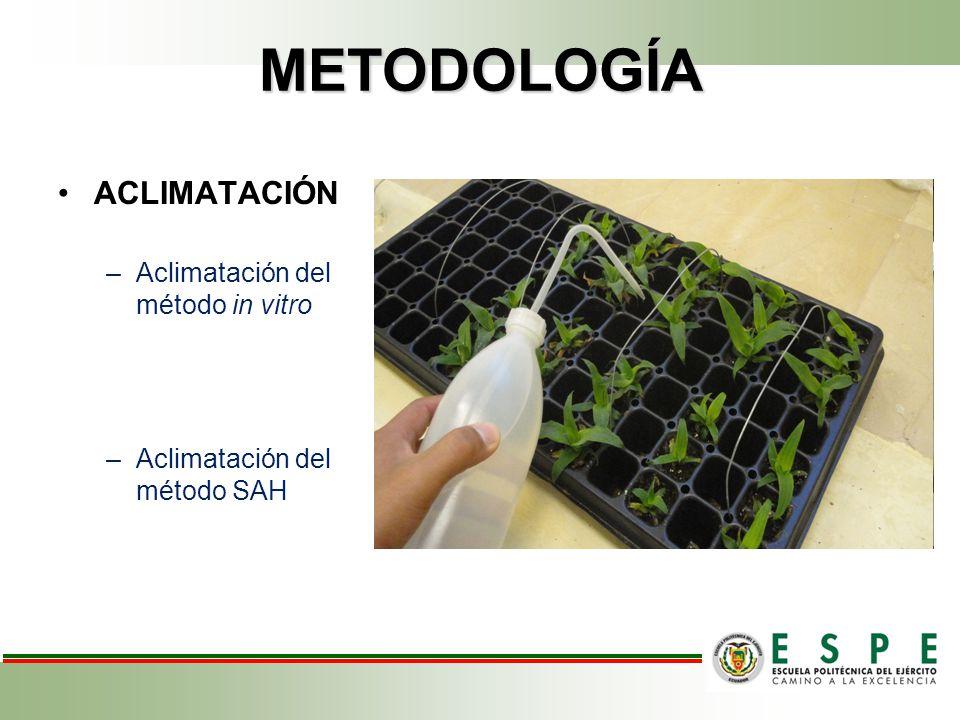 METODOLOGÍA ACLIMATACIÓN Aclimatación del método in vitro