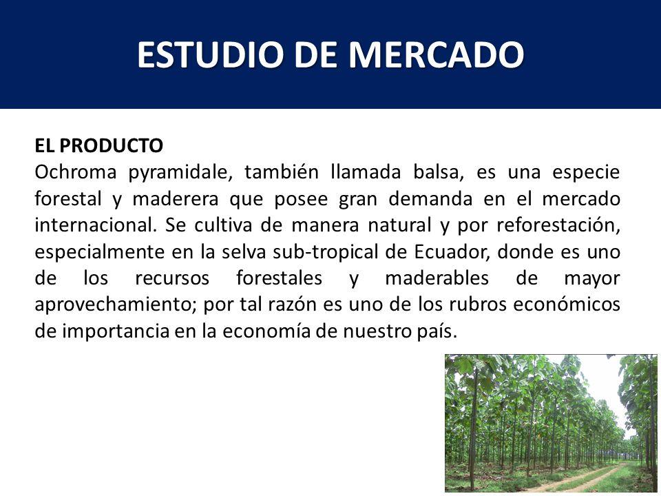 ESTUDIO DE MERCADO EL PRODUCTO