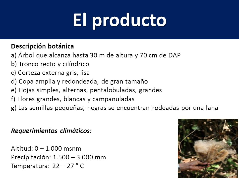 El producto Descripción botánica