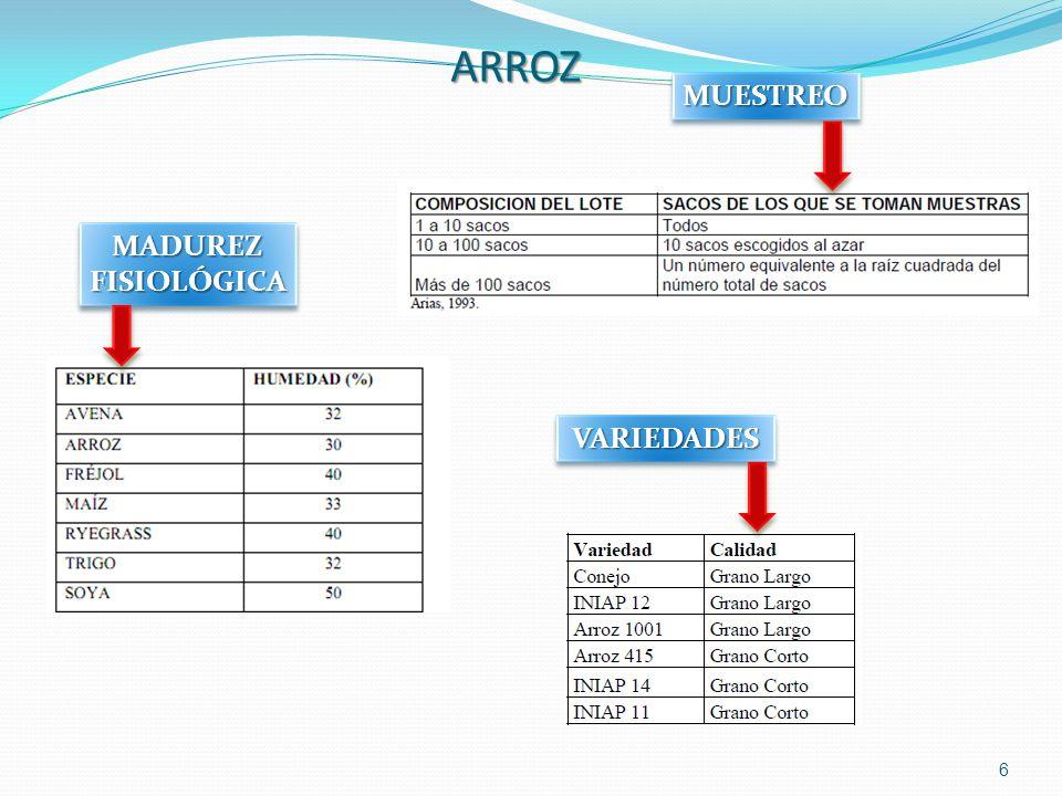ARROZ MUESTREO MADUREZ FISIOLÓGICA VARIEDADES