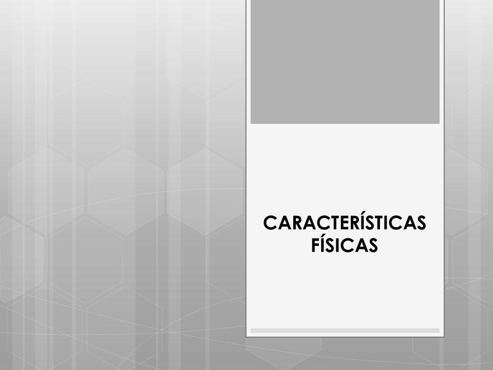 CARACTERÍSTICAS FÍSICAS