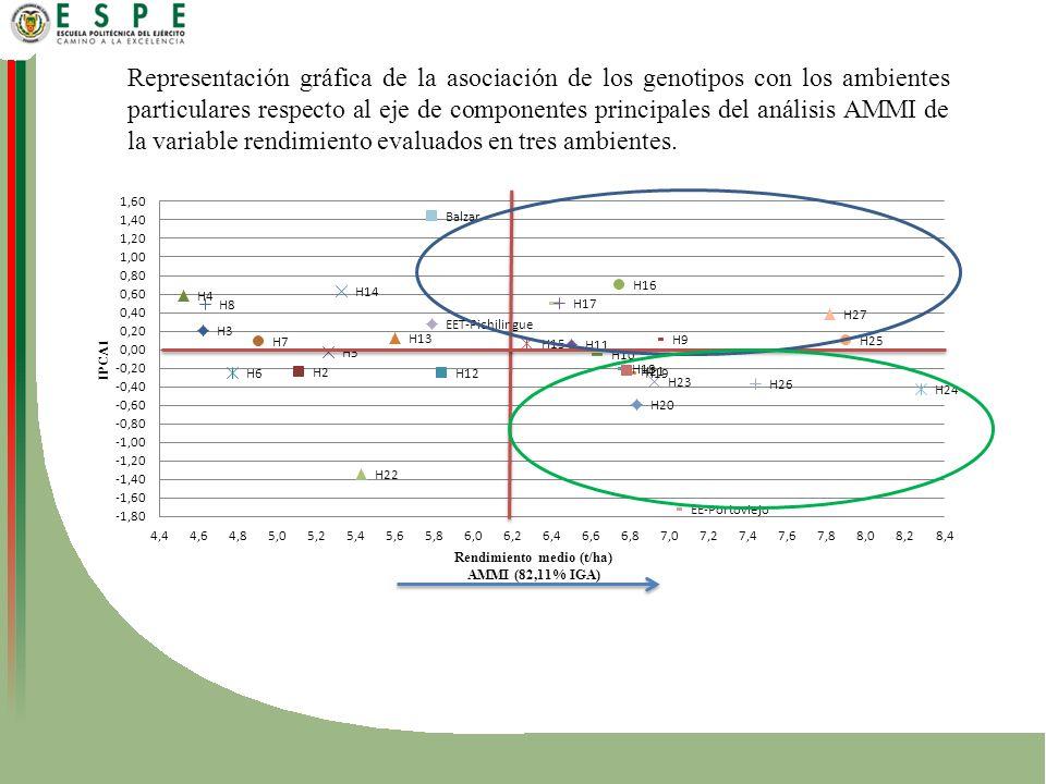 Representación gráfica de la asociación de los genotipos con los ambientes particulares respecto al eje de componentes principales del análisis AMMI de la variable rendimiento evaluados en tres ambientes.