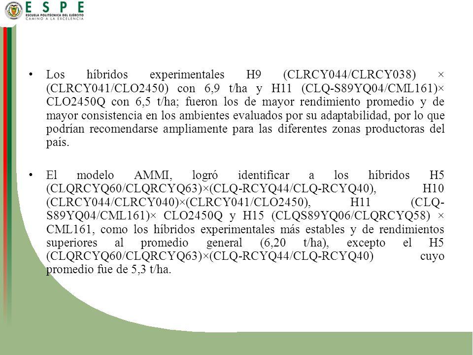 Los híbridos experimentales H9 (CLRCY044/CLRCY038) × (CLRCY041/CLO2450) con 6,9 t/ha y H11 (CLQ-S89YQ04/CML161)× CLO2450Q con 6,5 t/ha; fueron los de mayor rendimiento promedio y de mayor consistencia en los ambientes evaluados por su adaptabilidad, por lo que podrían recomendarse ampliamente para las diferentes zonas productoras del país.
