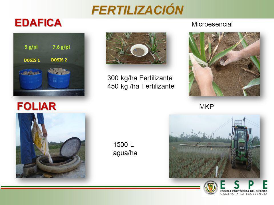 FERTILIZACIÓN EDAFICA FOLIAR Microesencial 300 kg/ha Fertilizante