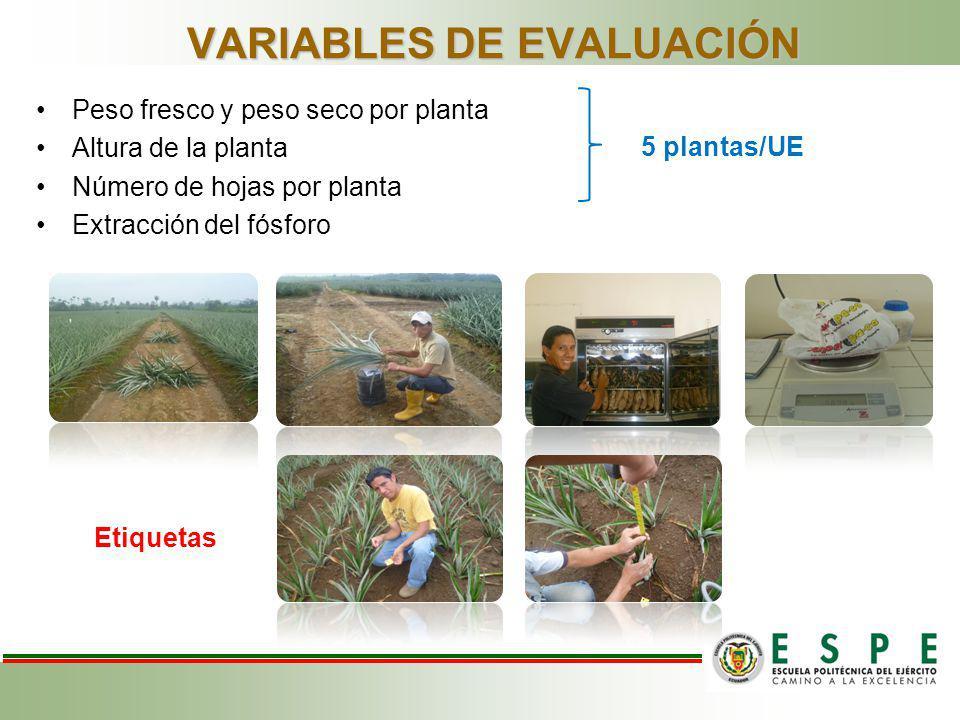 VARIABLES DE EVALUACIÓN