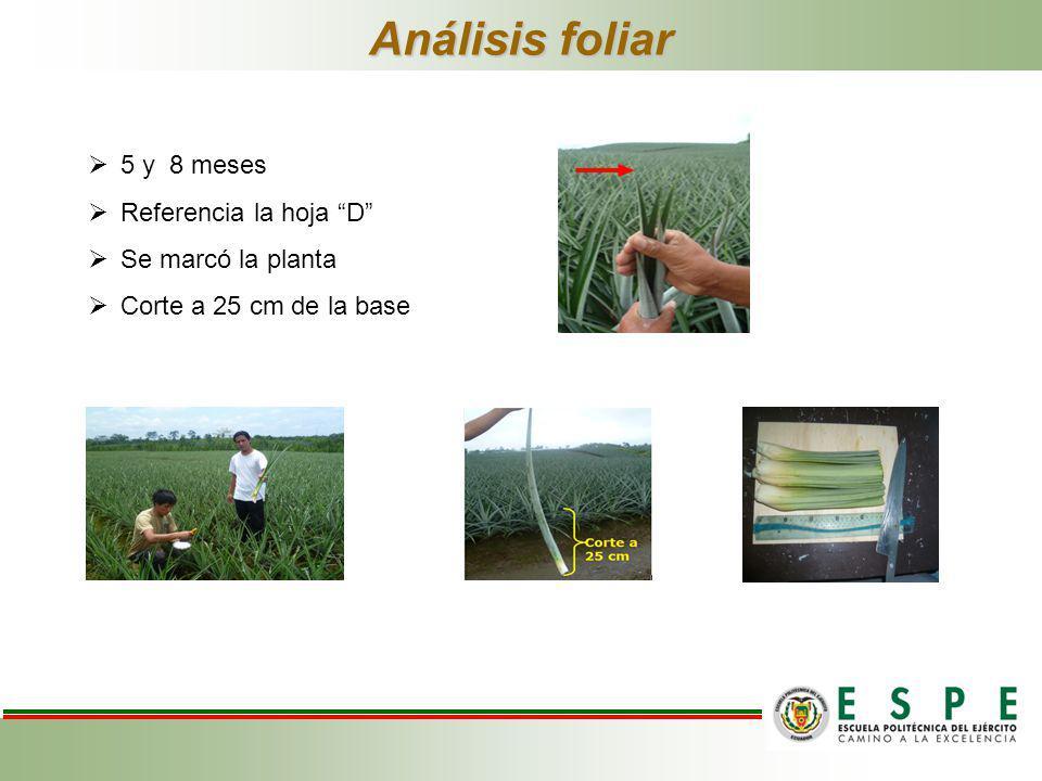 Análisis foliar 5 y 8 meses Referencia la hoja D Se marcó la planta