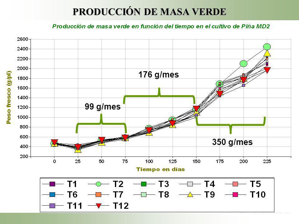 PRODUCCIÓN DE MASA VERDE