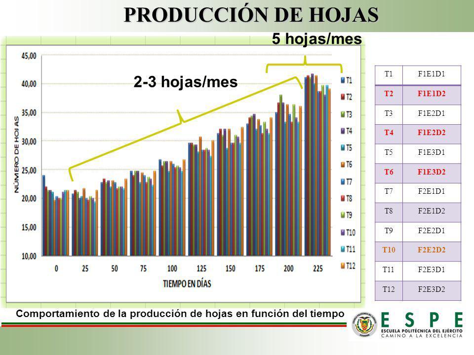Comportamiento de la producción de hojas en función del tiempo