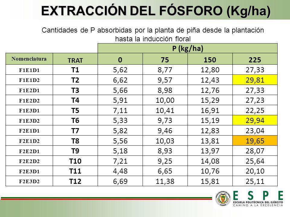EXTRACCIÓN DEL FÓSFORO (Kg/ha)