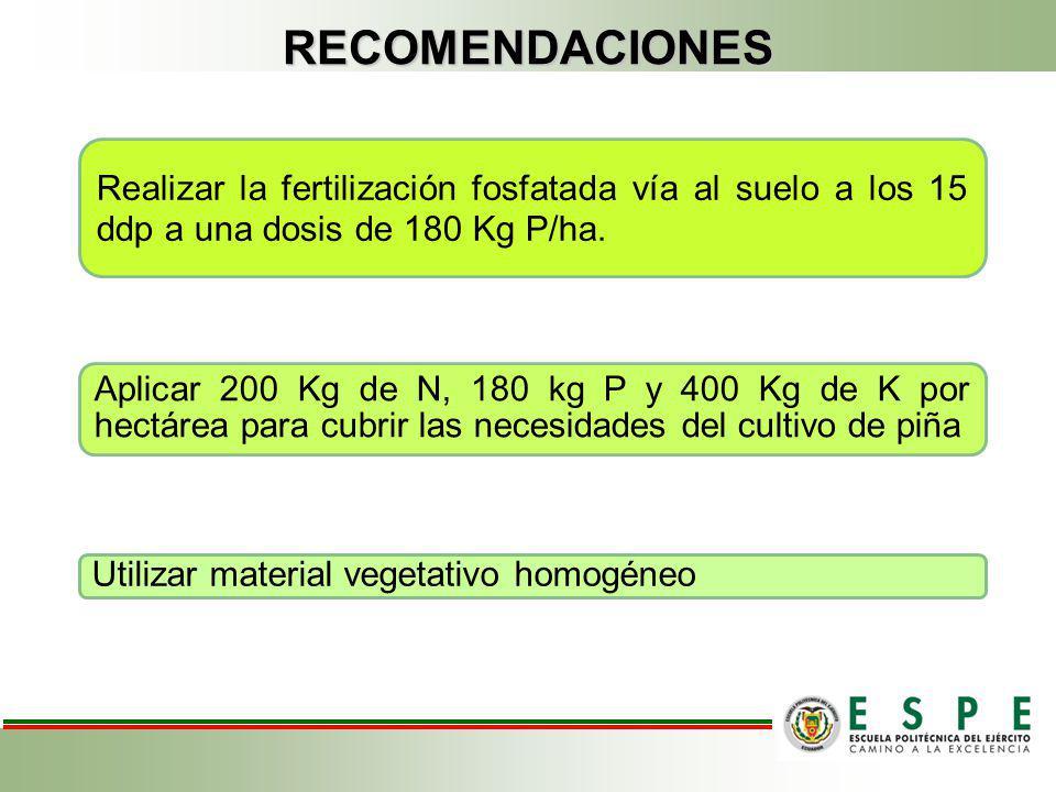 RECOMENDACIONES Realizar la fertilización fosfatada vía al suelo a los 15 ddp a una dosis de 180 Kg P/ha.