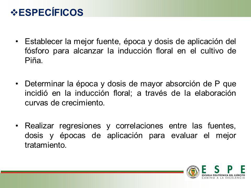 ESPECÍFICOS Establecer la mejor fuente, época y dosis de aplicación del fósforo para alcanzar la inducción floral en el cultivo de Piña.