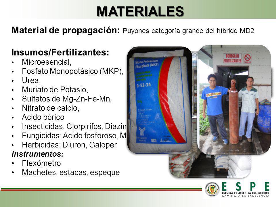 MATERIALES Material de propagación: Puyones categoría grande del híbrido MD2. Insumos/Fertilizantes:
