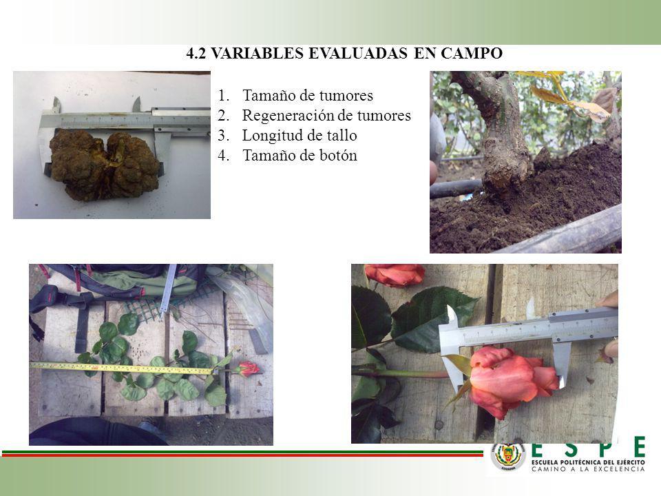 4.2 VARIABLES EVALUADAS EN CAMPO
