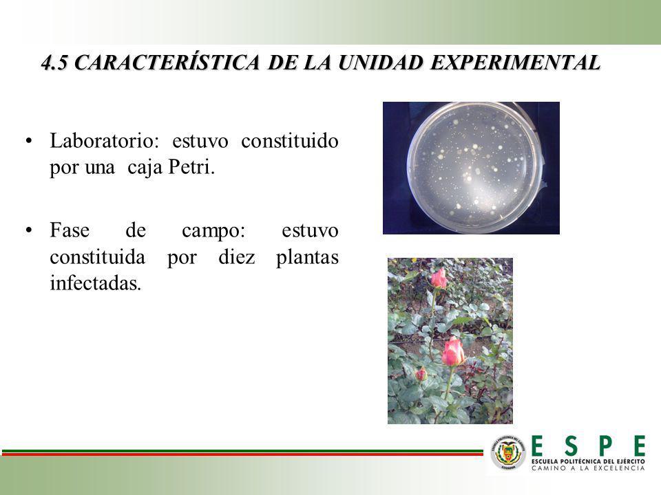 4.5 CARACTERÍSTICA DE LA UNIDAD EXPERIMENTAL