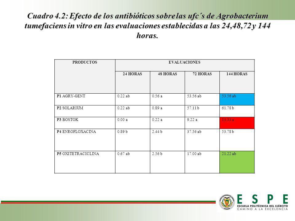 Cuadro 4.2: Efecto de los antibióticos sobre las ufc´s de Agrobacterium tumefaciens in vitro en las evaluaciones establecidas a las 24,48,72 y 144 horas.