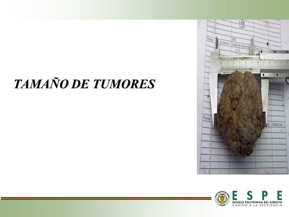 TAMAÑO DE TUMORES