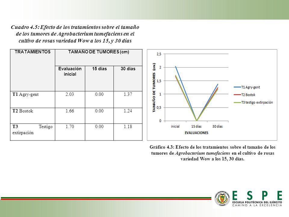 Cuadro 4.5: Efecto de los tratamientos sobre el tamaño de los tumores de Agrobacterium tumefaciens en el cultivo de rosas variedad Wow a los 15, y 30 días
