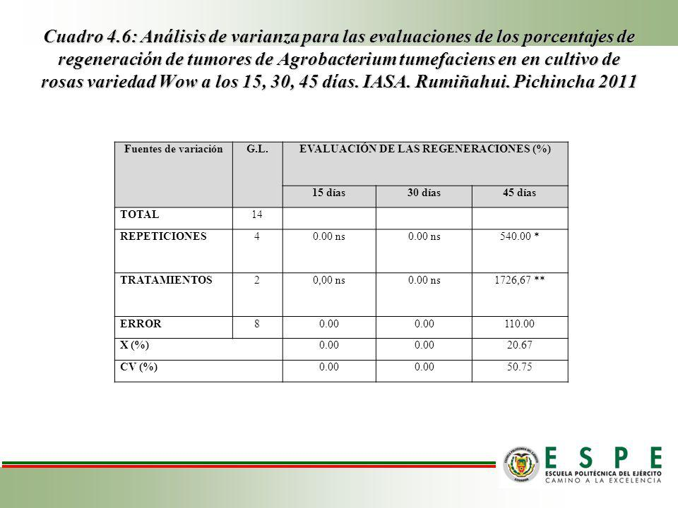 EVALUACIÓN DE LAS REGENERACIONES (%)
