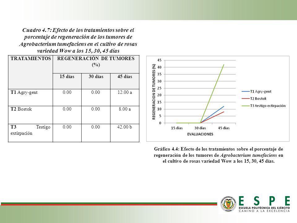 REGENERACIÓN DE TUMORES (%)