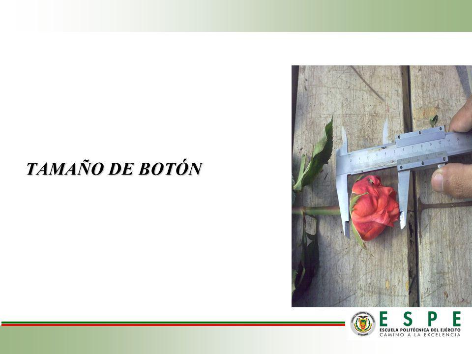 TAMAÑO DE BOTÓN