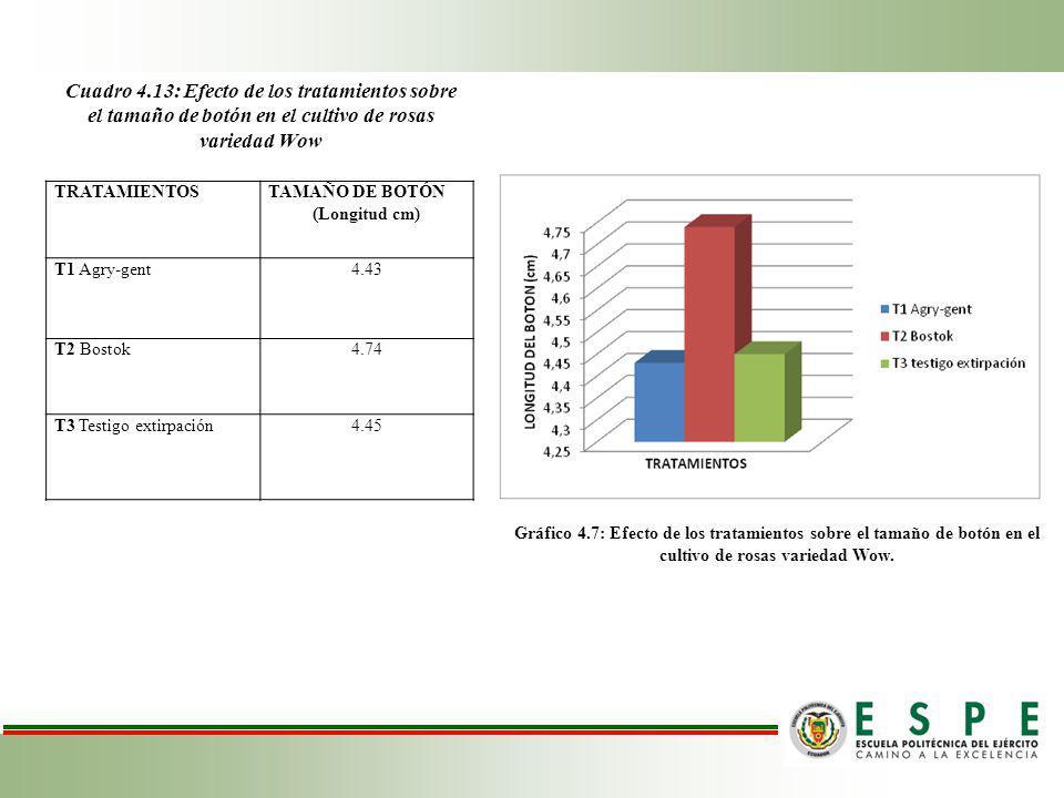 Cuadro 4.13: Efecto de los tratamientos sobre el tamaño de botón en el cultivo de rosas variedad Wow
