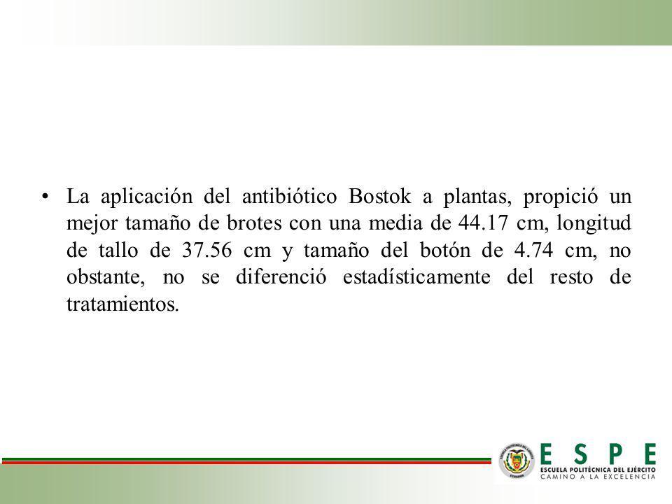 La aplicación del antibiótico Bostok a plantas, propició un mejor tamaño de brotes con una media de 44.17 cm, longitud de tallo de 37.56 cm y tamaño del botón de 4.74 cm, no obstante, no se diferenció estadísticamente del resto de tratamientos.