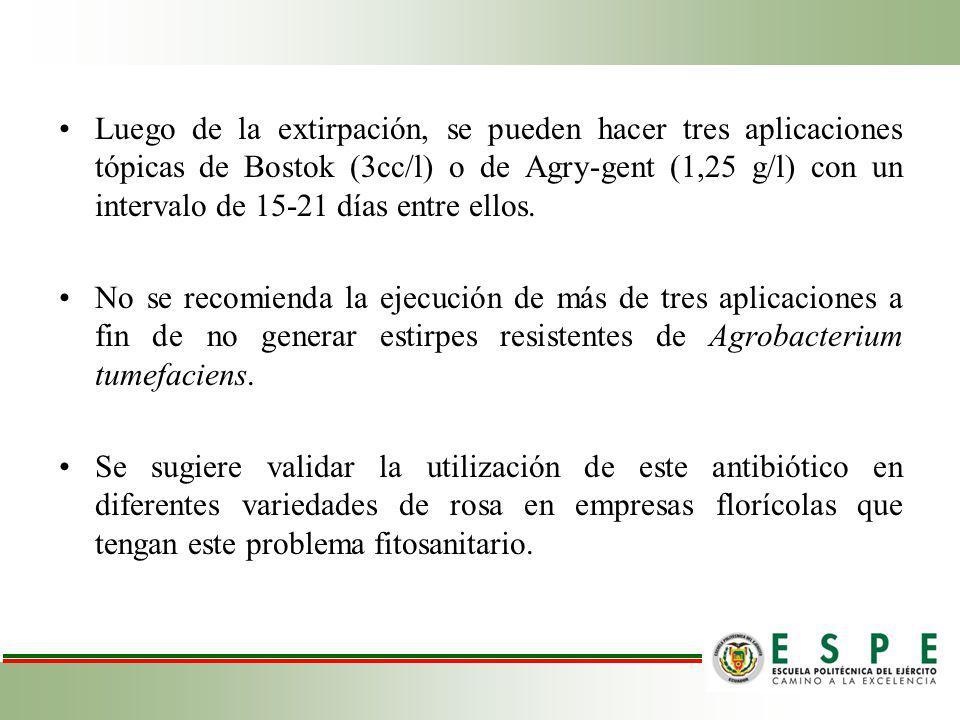 Luego de la extirpación, se pueden hacer tres aplicaciones tópicas de Bostok (3cc/l) o de Agry-gent (1,25 g/l) con un intervalo de 15-21 días entre ellos.