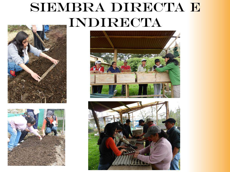 SIEMBRA DIRECTA E INDIRECTA