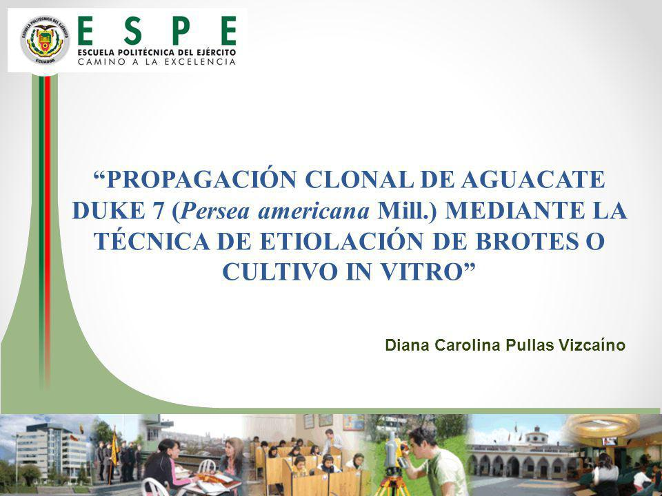 PROPAGACIÓN CLONAL DE AGUACATE DUKE 7 (Persea americana Mill