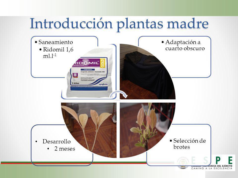Introducción plantas madre
