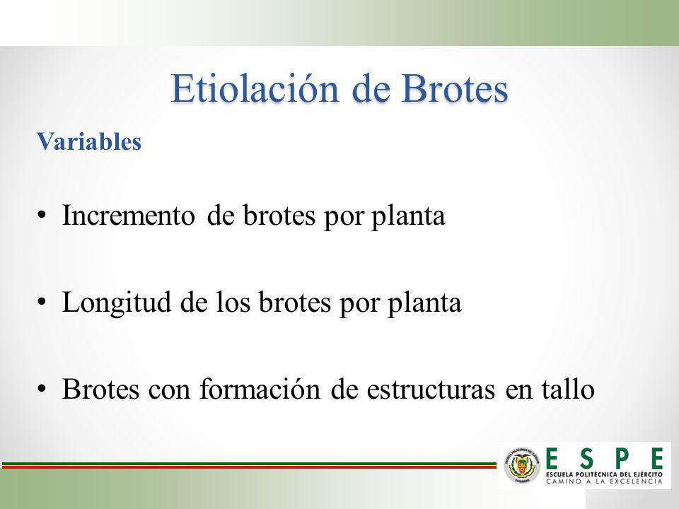 Etiolación de Brotes Incremento de brotes por planta