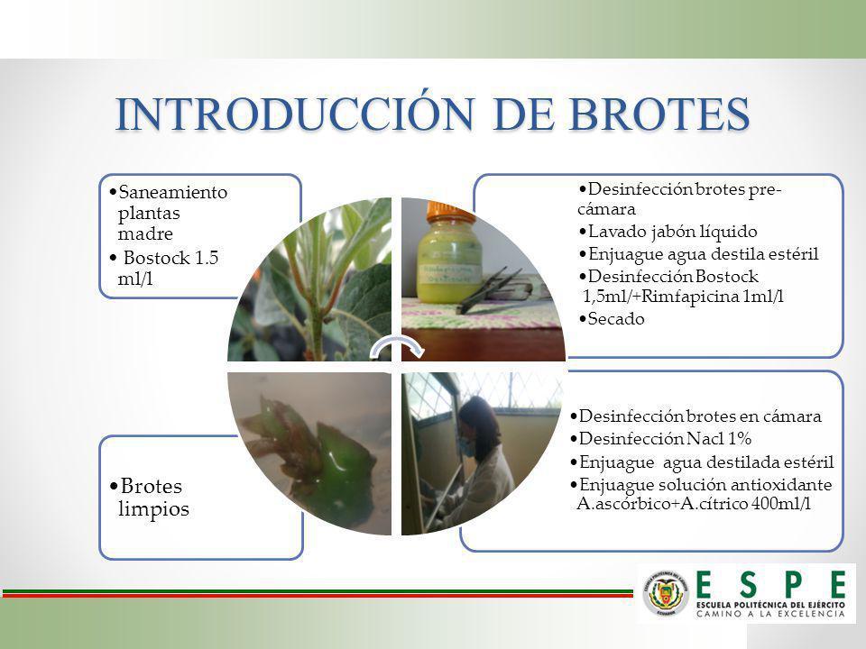 INTRODUCCIÓN DE BROTES