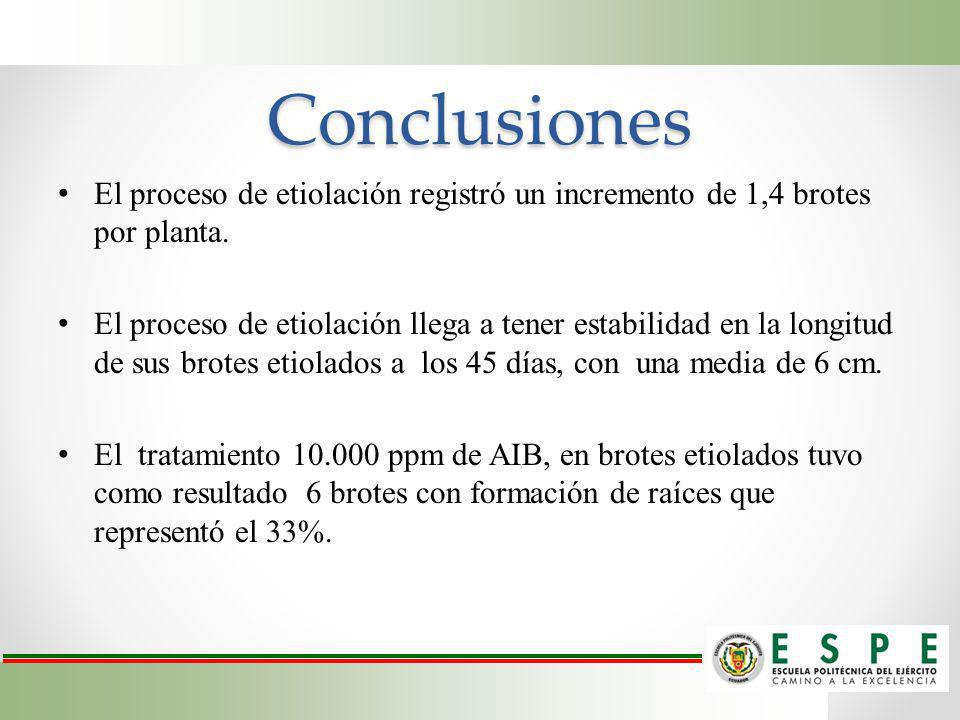 Conclusiones El proceso de etiolación registró un incremento de 1,4 brotes por planta.