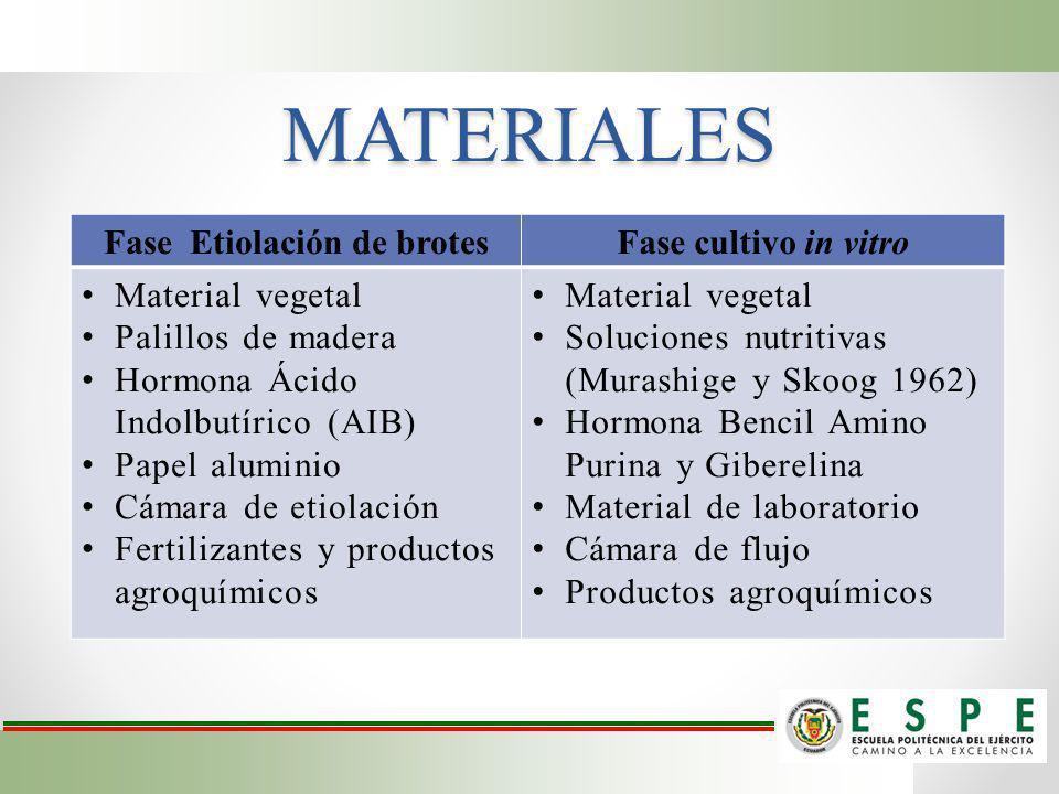 Fase Etiolación de brotes
