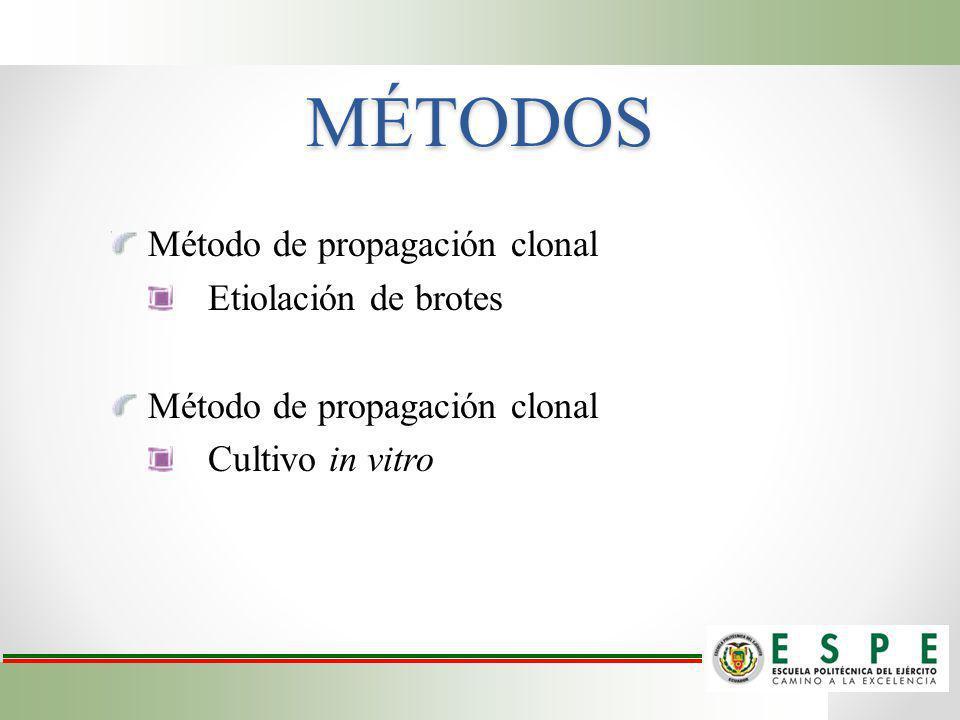 MÉTODOS Método de propagación clonal Etiolación de brotes