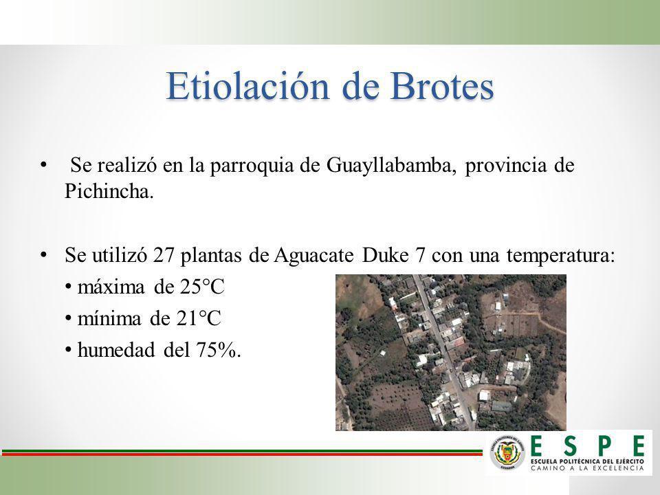 Etiolación de Brotes Se realizó en la parroquia de Guayllabamba, provincia de Pichincha.